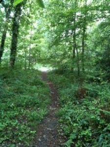 Trail de la Fraise le taillan medoc