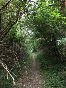 Compte rendu Trail la Sarladaise 2018