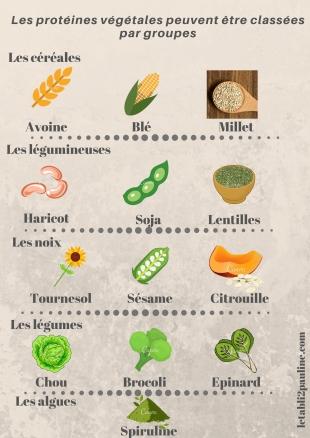 Groupe de protéines végétales